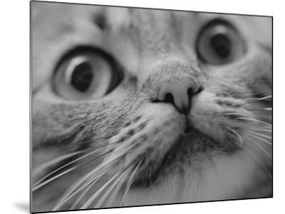 Close Up of Cat's Face-Henry Horenstein-Mounted Photographic Print