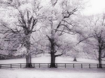 Trees and Fence in Snowy Field-Robert Llewellyn-Framed Photographic Print