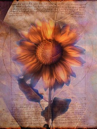 Sunflower and Text-Colin Anderson-Framed Photographic Print