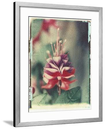 Freesia Flower-Natalie Fobes-Framed Photographic Print