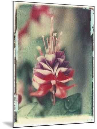 Freesia Flower-Natalie Fobes-Mounted Photographic Print