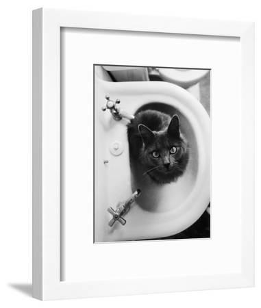 Cat Sitting In Bathroom Sink-Natalie Fobes-Framed Photographic Print