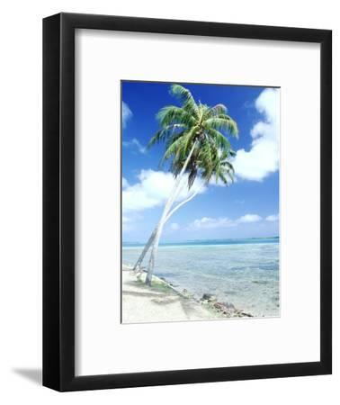 Palm Trees Along Shoreline--Framed Photographic Print