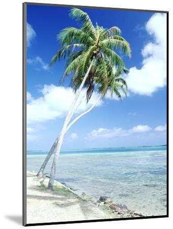 Palm Trees Along Shoreline--Mounted Photographic Print