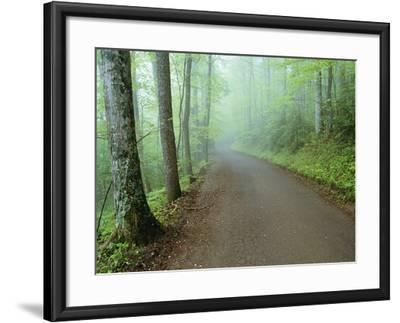 Road in Great Smoky Mountains National Park-Darrell Gulin-Framed Photographic Print