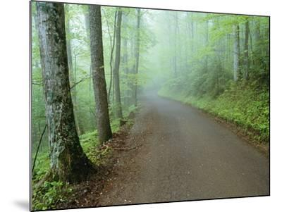 Road in Great Smoky Mountains National Park-Darrell Gulin-Mounted Photographic Print