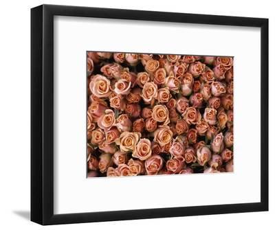 Pink Roses at Albert Kuyp Market-Owen Franken-Framed Photographic Print