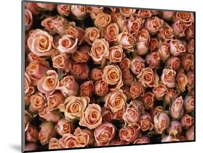 Pink Roses at Albert Kuyp Market-Owen Franken-Mounted Photographic Print