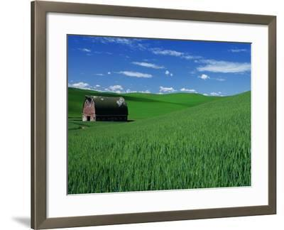 Red Barn in a Wheat Field-Darrell Gulin-Framed Photographic Print