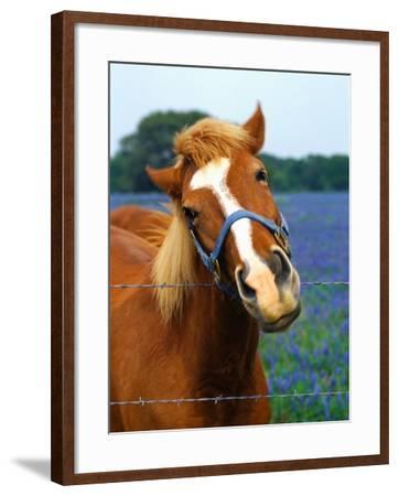 Horse Portrait-Darrell Gulin-Framed Photographic Print