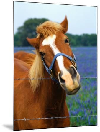 Horse Portrait-Darrell Gulin-Mounted Photographic Print