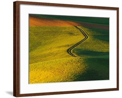 Wheat and Pea Fields-Darrell Gulin-Framed Photographic Print