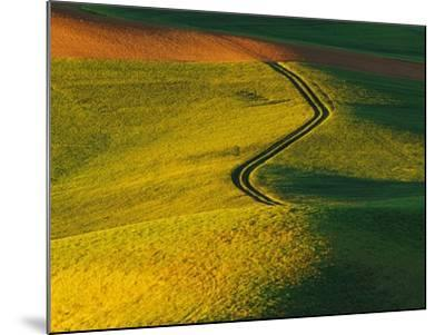 Wheat and Pea Fields-Darrell Gulin-Mounted Photographic Print
