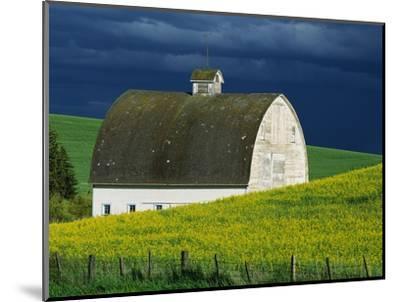 White Barn and Canola Field-Darrell Gulin-Mounted Photographic Print