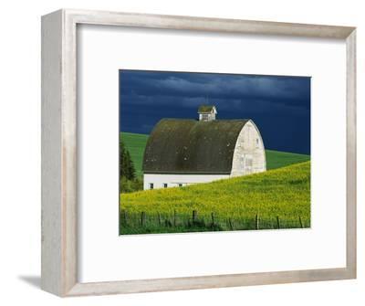 White Barn and Canola Field-Darrell Gulin-Framed Photographic Print