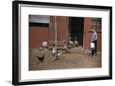 Boy Watching Geese Leave Barn-William P^ Gottlieb-Framed Photographic Print