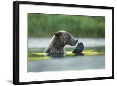 Brown Bear and Salmon, Katmai National Park, Alaska-Paul Souders-Framed Photographic Print