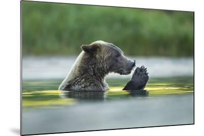 Brown Bear and Salmon, Katmai National Park, Alaska-Paul Souders-Mounted Photographic Print