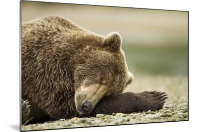 Sleeping Brown Bear, Katmai National Park, Alaska-Paul Souders-Mounted Photographic Print