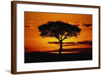 Silhouetted Camelthorn Tree at Sunset-Paul Souders-Framed Photographic Print