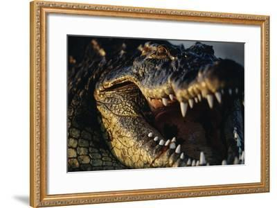 Nile Crocodile with Open Mouth-Paul Souders-Framed Photographic Print