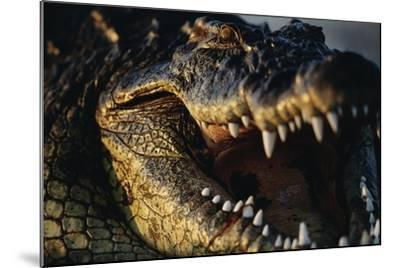 Nile Crocodile with Open Mouth-Paul Souders-Mounted Photographic Print