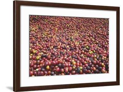 Coffee Cherries-Paul Souders-Framed Photographic Print