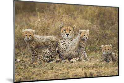 Cheetah Cubs and their Mother-Paul Souders-Mounted Photographic Print