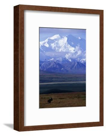 Moose on Tundra Below Mt. Mckinley in Alaska-Paul Souders-Framed Photographic Print