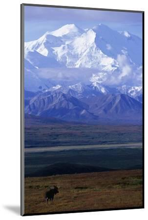Moose on Tundra Below Mt. Mckinley in Alaska-Paul Souders-Mounted Photographic Print