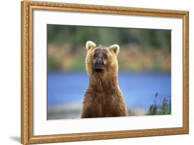 Brown Bear Standing Erect in Katmai National Park-Paul Souders-Framed Photographic Print