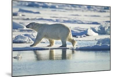 Polar Bear, Svalbard, Norway-Paul Souders-Mounted Photographic Print