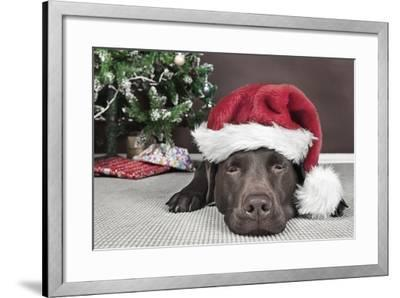 Labrador in Santa Hat Sleeping by Xmas Tree--Framed Photographic Print