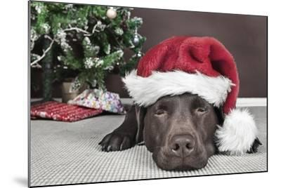 Labrador in Santa Hat Sleeping by Xmas Tree--Mounted Photographic Print