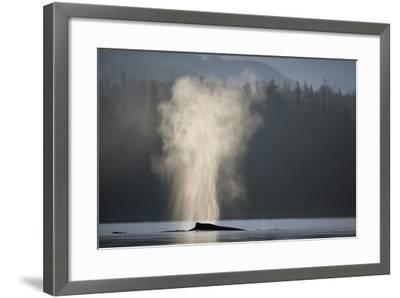 Humpback Whale Spouting in Frederick Sound at Dawn--Framed Photographic Print