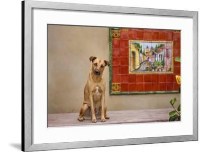 Pet Dog, Baja, Mexico--Framed Photographic Print