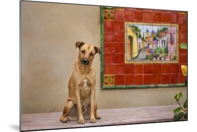 Pet Dog, Baja, Mexico--Mounted Photographic Print