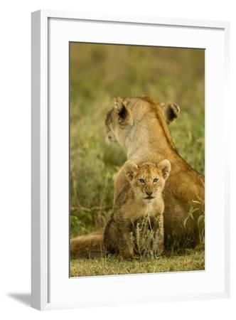 Lion Cub with Mother--Framed Photographic Print