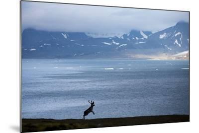 Reindeer, Svalbard, Norway-Paul Souders-Mounted Photographic Print