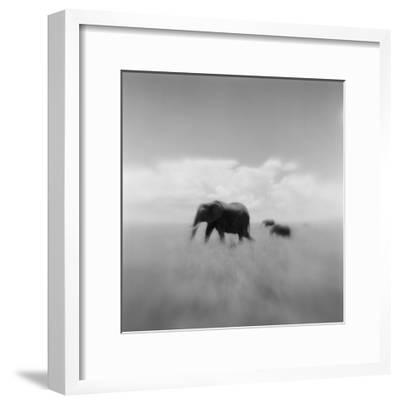 Elephant Herd, Masai Mara Game Reserve, Kenya-Paul Souders-Framed Photographic Print