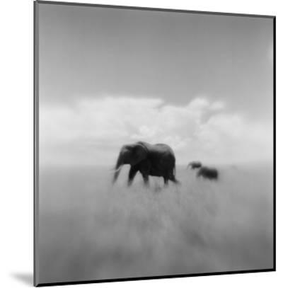 Elephant Herd, Masai Mara Game Reserve, Kenya-Paul Souders-Mounted Photographic Print