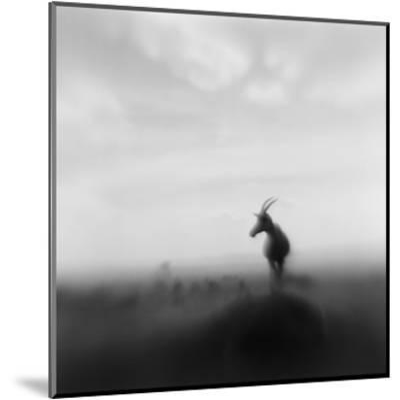 Topi Antelope, Masai Mara Game Reserve, Kenya-Paul Souders-Mounted Photographic Print