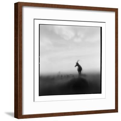 Topi Antelope, Masai Mara Game Reserve, Kenya-Paul Souders-Framed Photographic Print