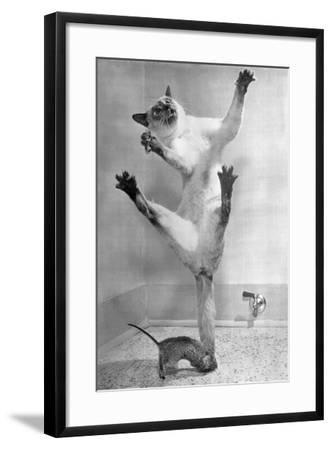 Cat Jumping over Mouse--Framed Photographic Print