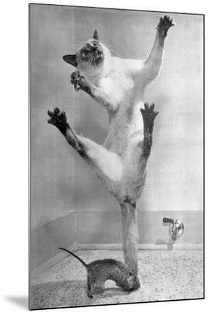Cat Jumping over Mouse--Mounted Photographic Print