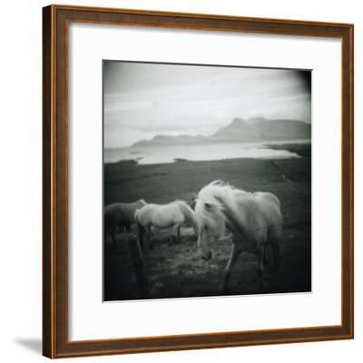 Horses in Pasture--Framed Photographic Print