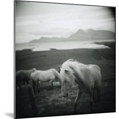 Horses in Pasture--Mounted Photographic Print