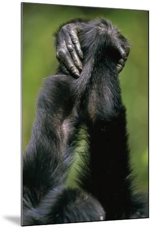 Close-Up of Chimpanzees Holding Hands--Mounted Photographic Print