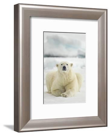 Polar Bear, Svalbard, Norway--Framed Photographic Print