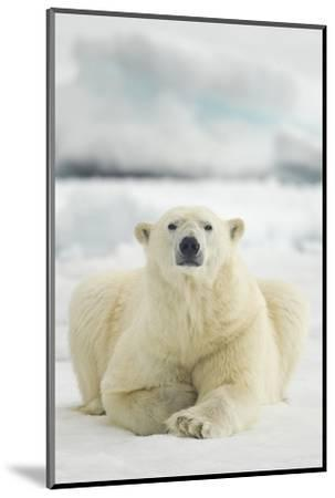 Polar Bear, Svalbard, Norway--Mounted Photographic Print